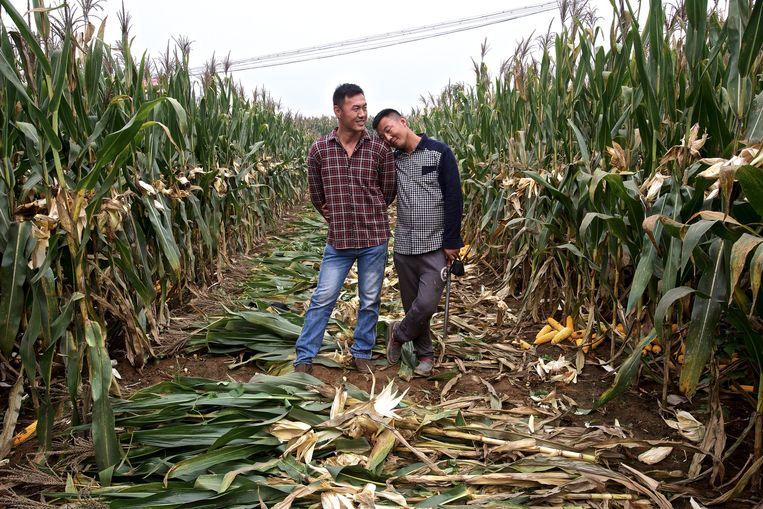 Anwei (links) en Yebin tussen de maisplanten in hun dorp in de provincie Hebei Beeld Feng Zhonghao