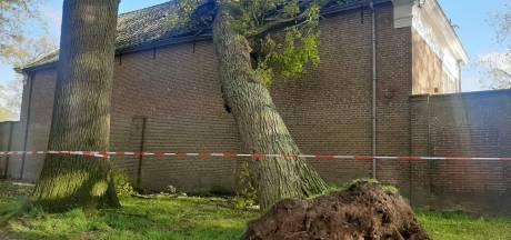 Eikenboom valt door het dak van Landgoed Middachten
