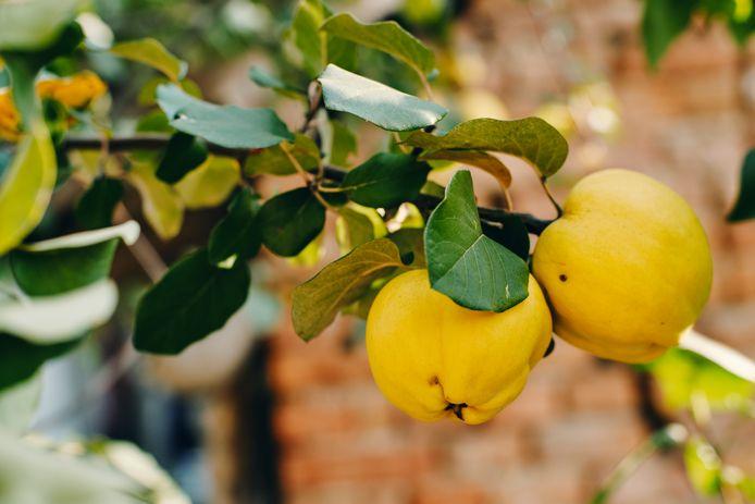 Romke, Kweeper appelvorm