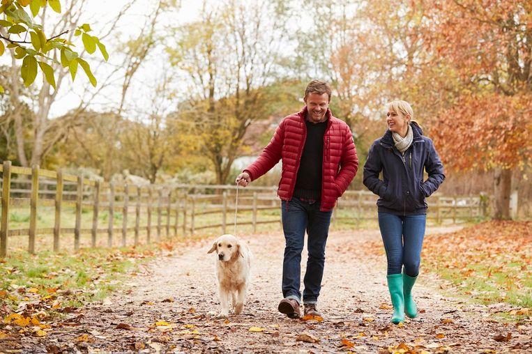 mature-couple-on-autumn-walk-with-labrador.jpg