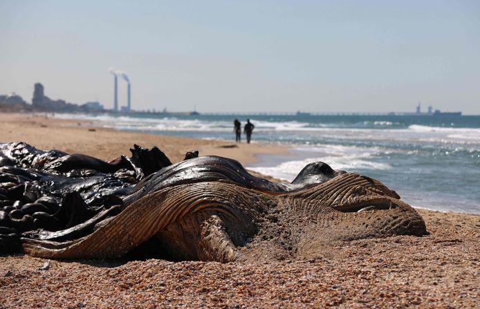 Een 17 meter lange vinvis spoelde dood aan na de olieramp.