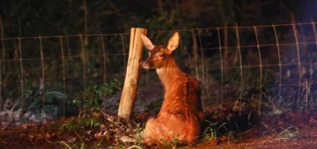 Motorrijder ernstig gewond na botsing met hert in Loenen, dier afgemaakt