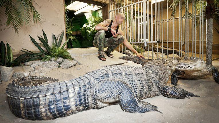 Ferry P. met zijn krokodillen in 2010. Beeld Marc Driessen