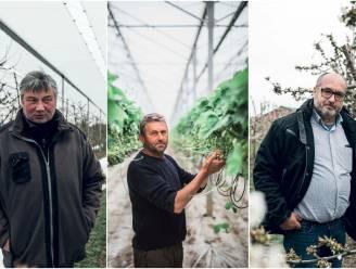 """""""Wij zijn nog lang niet aan het einde van deze gevaarlijke periode"""": drie Limburgse fruittelers schatten schade van late winterprik op bloesems in"""