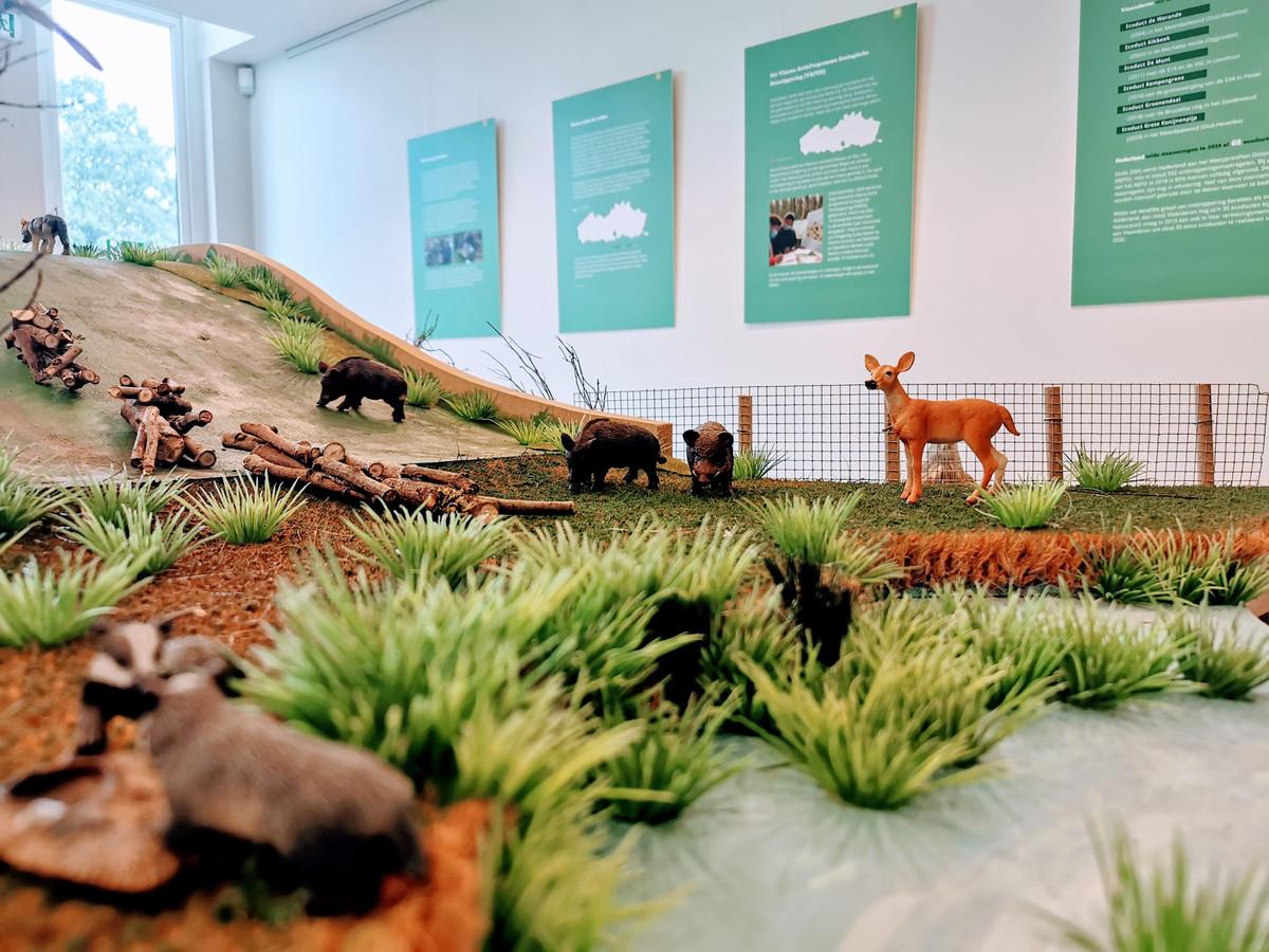 Een beeld van de expo in het Natuurpunt museum in Turnhout
