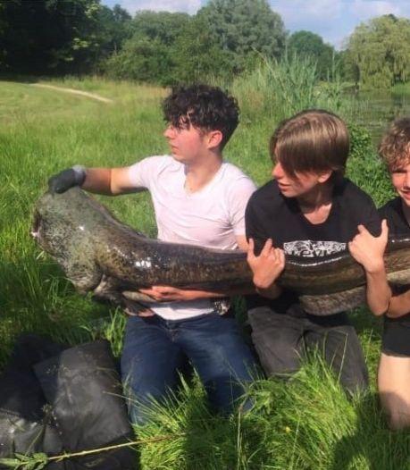 Tristan (16) vangt monstermeerval: 'Hij sleurde mij bijna het water in'