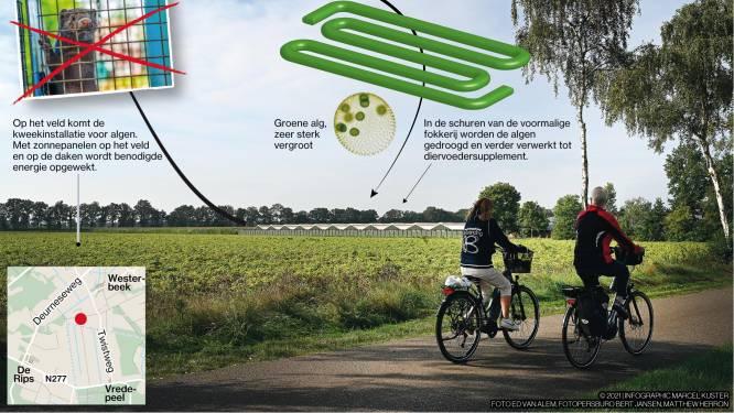 Voormalig nertsenboer wordt algenteler én energieproducent in Westerbeek
