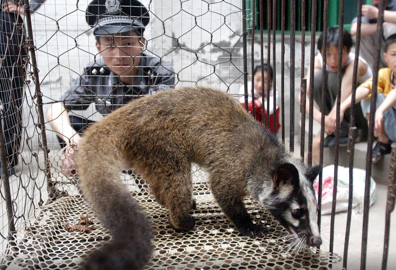 Het dodelijke SARS-virus was afkomstig van een civetkat, die verhandeld werd op een markt met exotische dieren.