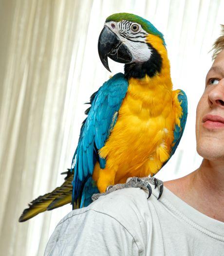 Ara Rocky vloog weg in Schijndel, 'maar ze kan helemaal niet vliegen'
