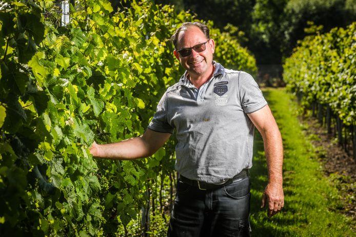 Marino Moenaert op zijn wijngaard in Oostkamp.