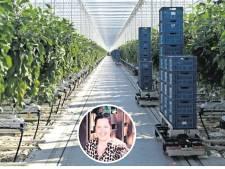 Deze nagelstyliste plukt nu aubergines: 'Ik moet de huur betalen'