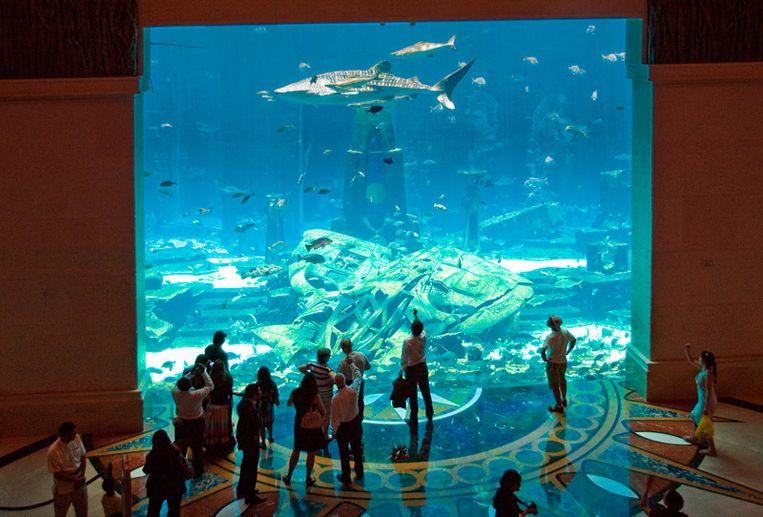 Katachtigen zijn niet de enige dieren waarmee gepronkt wordt. In een hotel in Dubai zwom zelfs een walvishaai rond. Beeld rv