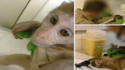 """Ophef na undercoverbeelden in grootste apenproefdiercentrum van Nederland: """"Testcentrum moet dicht"""""""