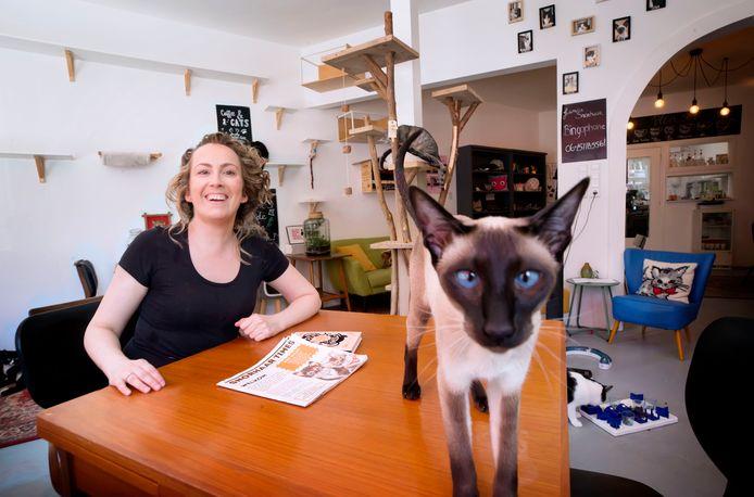Kattencafé Snorhaar in Breda.