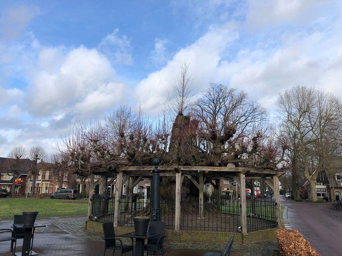 Lindeboom aan de Berg in Nuenen. Bovenuit steekt de nieuwe boom die in de holte van de oude boom is geplant
