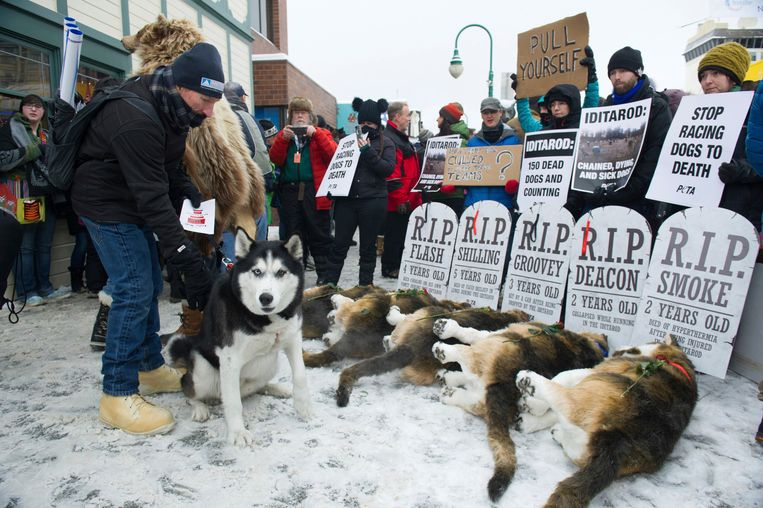 Anchorage resident Terry Fischer, with his Alaskan Husky Litho, happens into the People For the Ethical Treatment of Animals protest prior to the ceremonial start of the Iditarod Trail Sled Dog Race, Saturday, March 3, 2018, in Anchorage, Alaska. (AP Photo/Michael Dinneen) Beeld AP