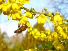 Volkstuinders in Vianen werken aan insectenweide