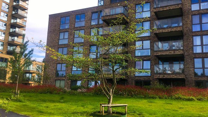 De boom die in het Hogekwartier is geplant.