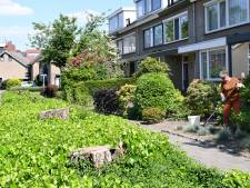 Etten-Leur stelt bewoners gerust: 'Gekapte bomen gaan niet naar biomassacentrale'