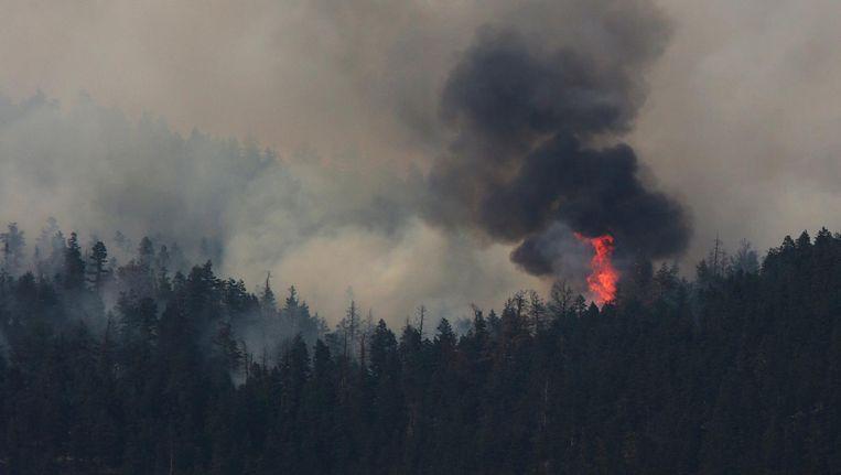 Sinds 1 april hebben in Brits-Columbia al 1.031 branden plaatsgevonden, die in totaal 900.000 hectare land hebben verwoest. Dat is een nieuw record in de geschiedenis van Brits-Columbia. Beeld reuters