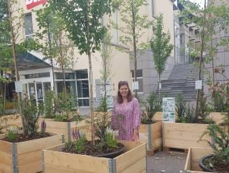 Pop-upbos verrijst op pleintje aan bibliotheek