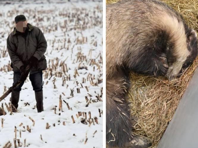"""Das overleden na mogelijke aanval, Natuurhulpcentrum furieus: """"Weer iemand uit de jagerij"""""""