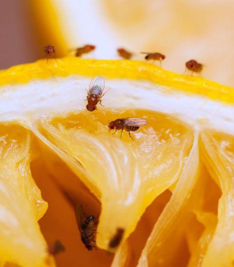 Oubliez le vinaigre et le détergent: voici la véritable astuce contre les mouches à fruits
