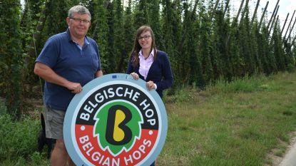 """Poperinge wil eigen hopsoort ontwikkelen: """"Om concurrentie met het buitenland aan te gaan"""""""