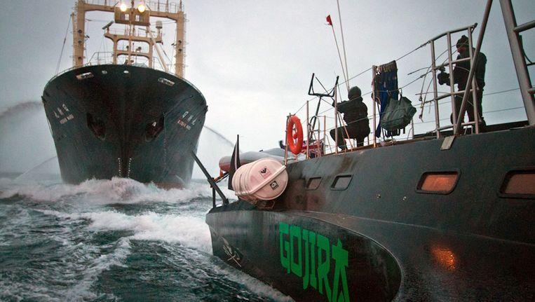 Actievoerders van Sea Shepherd zitten een Japanse walvisvaarder dwars. Beeld AP