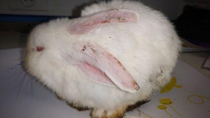 """Opvangcentrum roept op: """"Een dier is géén goed eindejaarsgeschenk"""""""