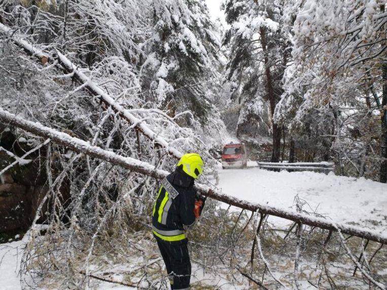 Bomen knakken massaal door het gewicht van de sneeuw.