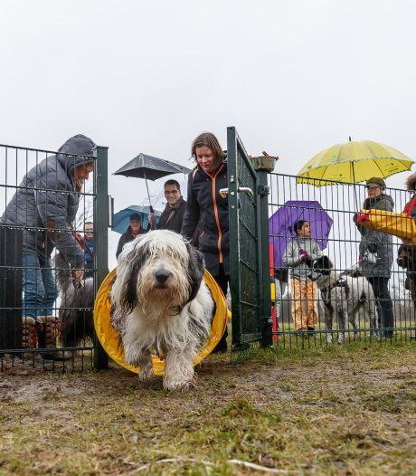 Extra hondenlosloopterreinen in Moerdijk: 'Eerst kijken of er behoefte is'