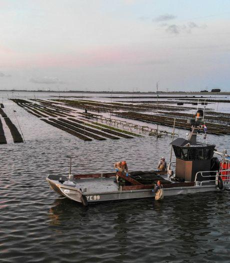 MSC-certificaat voor duurzame oesters