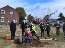 Monument met Anne Frankboom bij entree van  Overloon en er komt nog meer