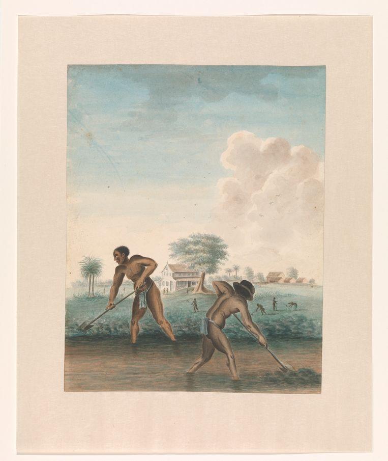 Tot slaaf gemaakte mannen graven trenzen, ca. 1850, maker onbekend. Beeld Rijksmuseum