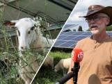 In Brummen grazen de schapen tussen zonnepanelen