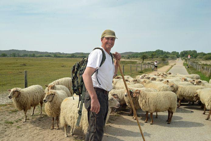 Jan Kaljouw leidt zijn 53 schapen en één lammetje over het Duinhoevepad naar hun eerste graasgebied in de duinen bij Nieuw-Haamstede.