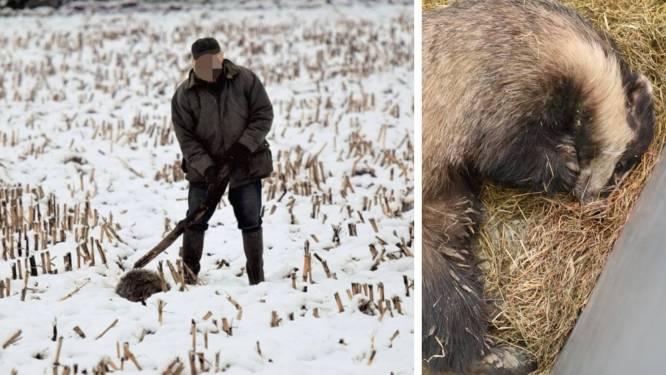 """""""Das is er erg aan toe"""": Natuurhulpcentrum verzorgt toegetakeld diertje, verdachte is gekend"""