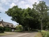 Honderd Astense bomen om voor aanleg fietspad