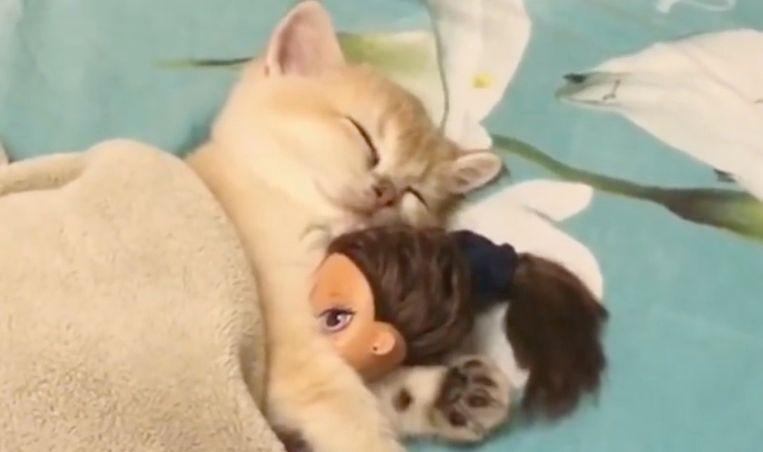 VIRAL3: katje valt in slaap onder dekentje en met barbiepop onder de pootjes.