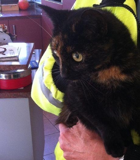 Groot vrijwilligerstekort bij dierenambulance Achterhoek: hulp uit Drenthe ingeschakeld