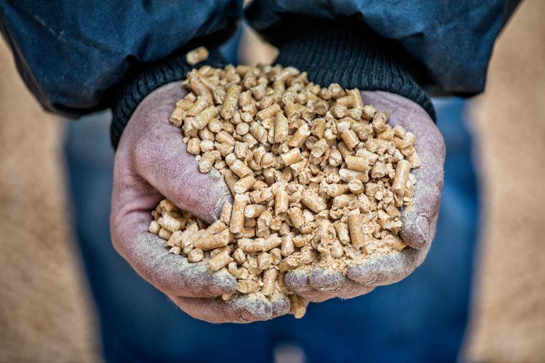 De houtpellets die ook Vattenfall wil gebruiken in zijn centrale.  Beeld raymond rutting