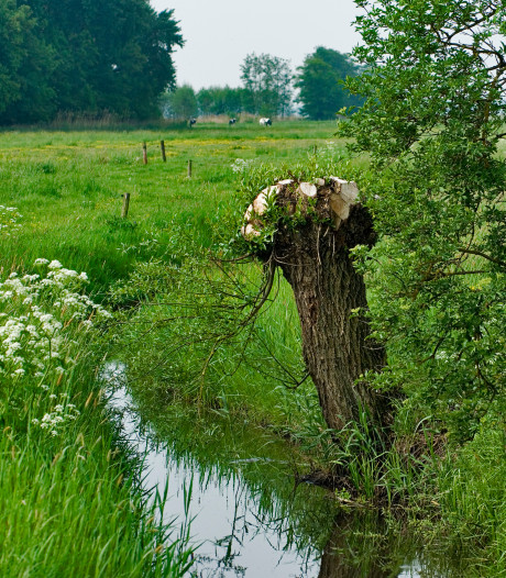 Buffer bij natuurgebied Kamerik Teylingen na landruil boeren