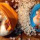 Veel kritiek op de gratis Hamsterbollies: 'Totaal niet van deze tijd'