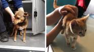 Dierendag bij de hulpdiensten: brandweer redt kitten uit boom en politie plukt hondje van straat