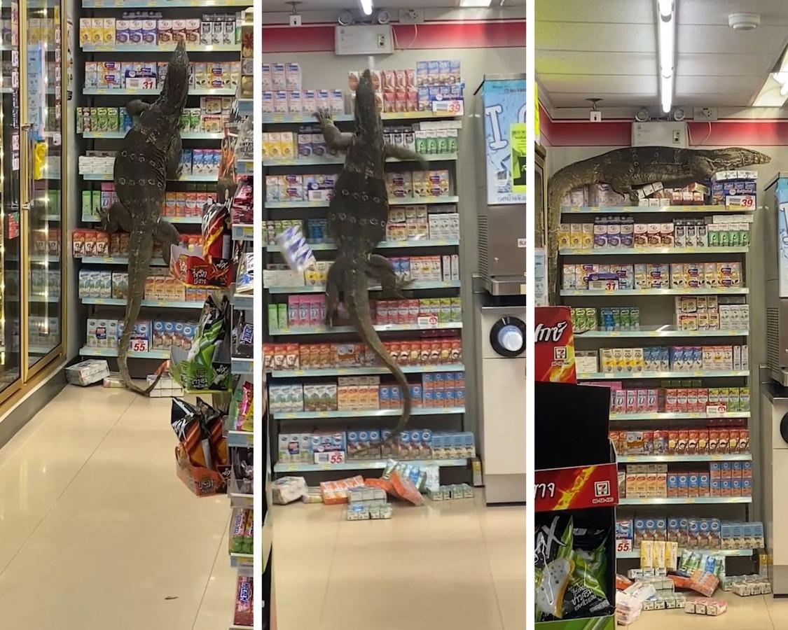 Un reptile d'1,80 m de long a émergé d'un canal voisin et a couru dans un magasin, déclenchant la panique du personnel et des clients qui se sont cachés derrière le comptoir.
