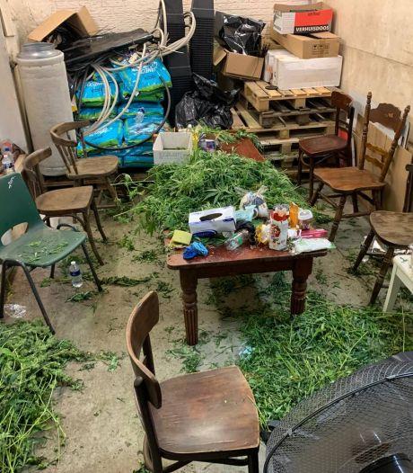 1350 wietplanten, harddrugs en een vuurwapen: aanhouding 'Wietpolen' verbaast niemand