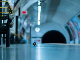 Foto worstelende muizen in Londense metro wint Wildlife Photographer of the Year 2019
