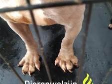 Zeven verwaarloosde honden in woning, baasje mag dieren houden