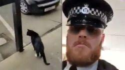 Agent laat kat uit terwijl de eigenaars in lockdown zitten